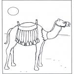 Disegni da colorare Animali - Cammello al sole