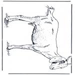 Disegni da colorare Animali - Capra