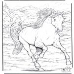 Disegni da colorare Animali - Cavallo 4