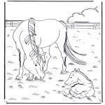 Disegni da colorare Animali - Cavallo e puledro