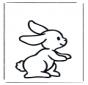 Coniglio 1