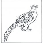 Disegni da colorare Animali - Fagiano