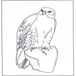 Disegni da colorare Animali - Falco