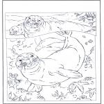 Disegni da colorare Animali - Foche