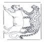 Leone e leopardo