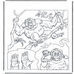 Disegni da colorare Animali - Orangutan