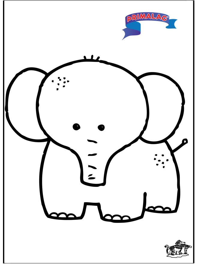 Primalac - elefante - Animali