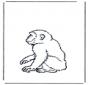 Scimmia 2
