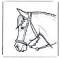 Testa di cavallo 2